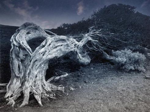 creepy-tree-1