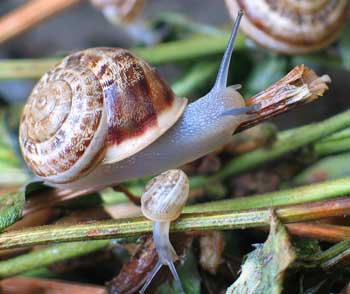 snail-leave-300